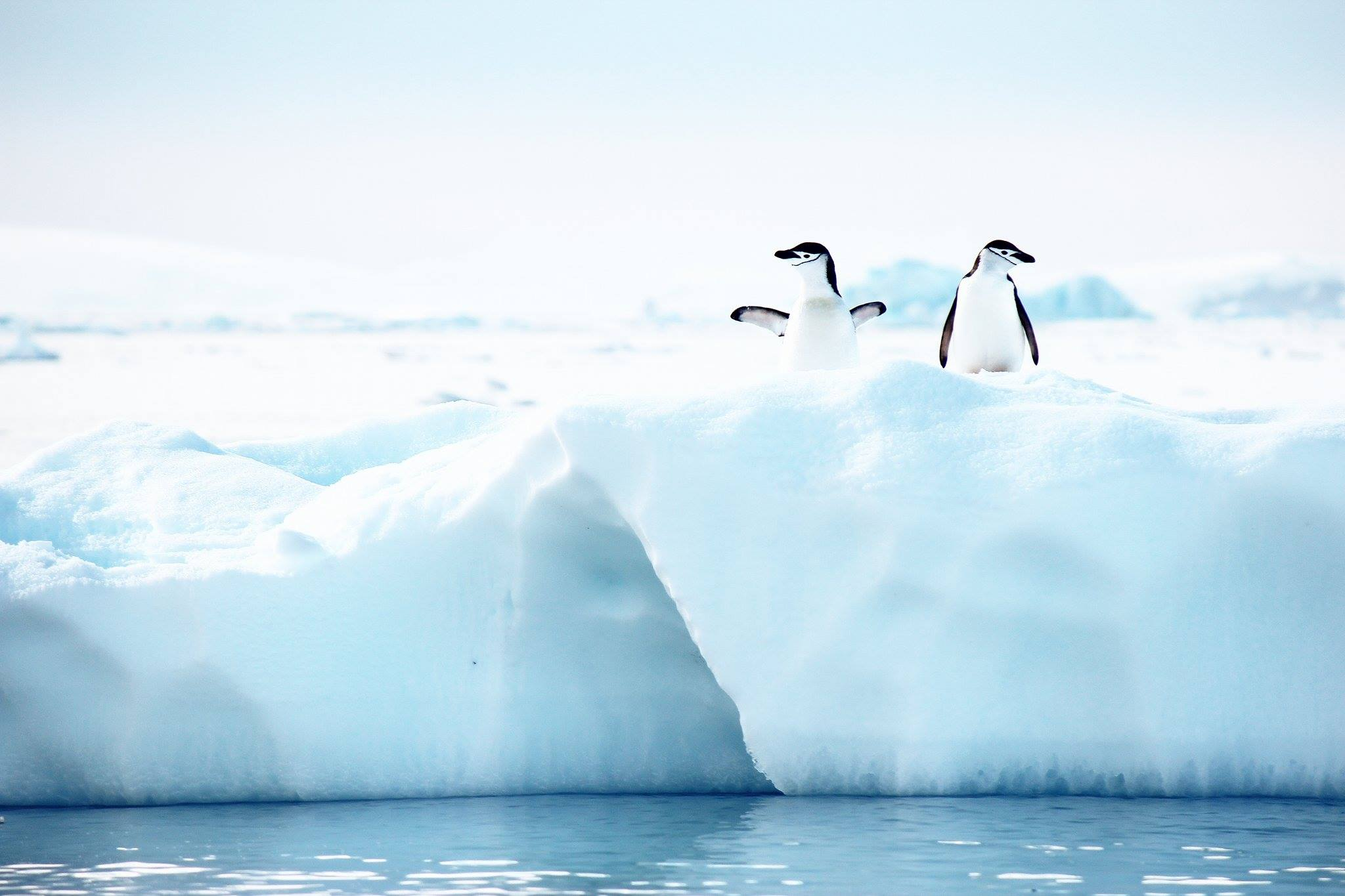 How To Book A Last Minute Cruise To Antarctica And Save